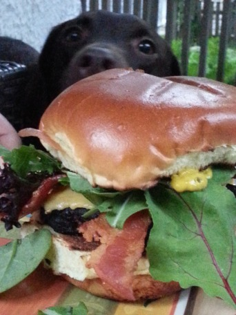 Cheeseburger with gluten free bun (and my puppy lurking behind it)